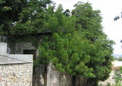 Haiti 2009 15